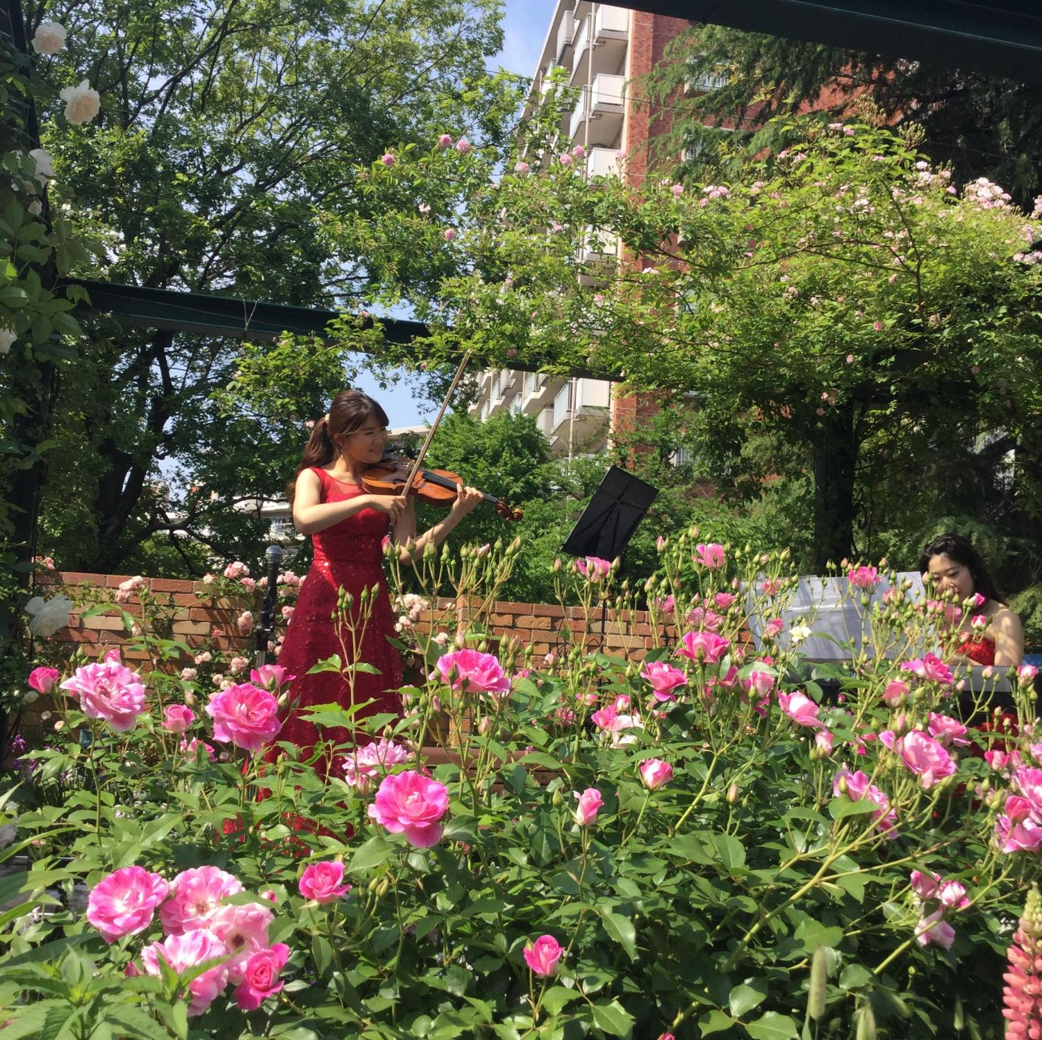 Beautiful tone of violin and piano sounds through incense Rose garden of the four seasons.