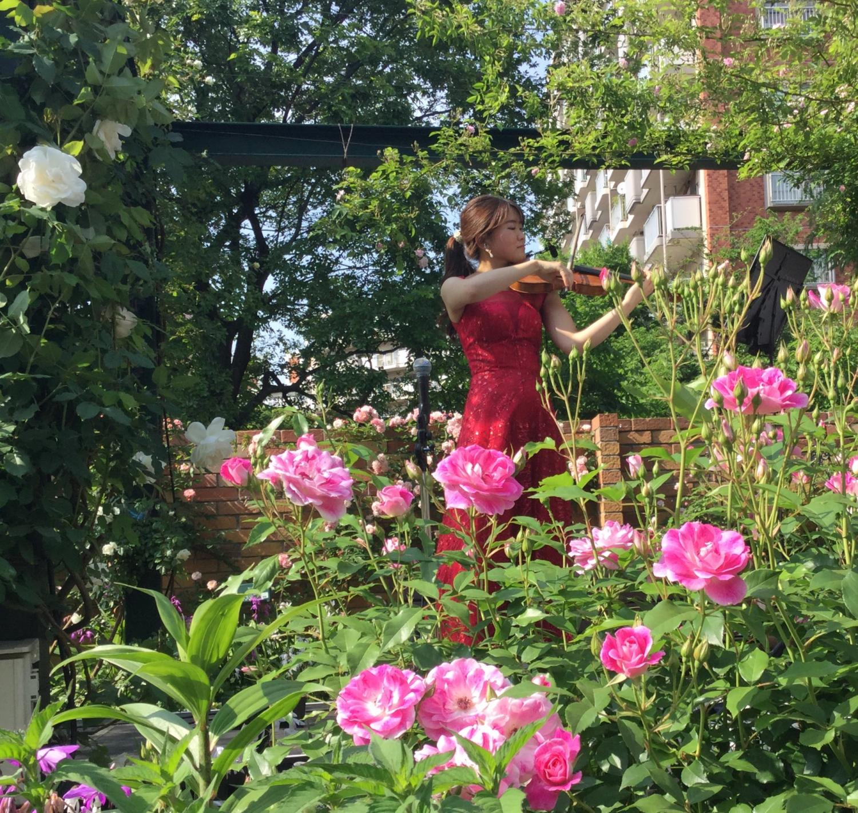사계의 향기 로즈 가든에 바이올린과 피아노의 아름다운 음색이 울립니다. 이미지