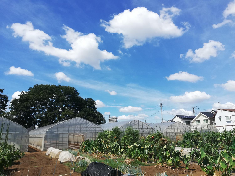 Agricultural school Ishizumi love rando