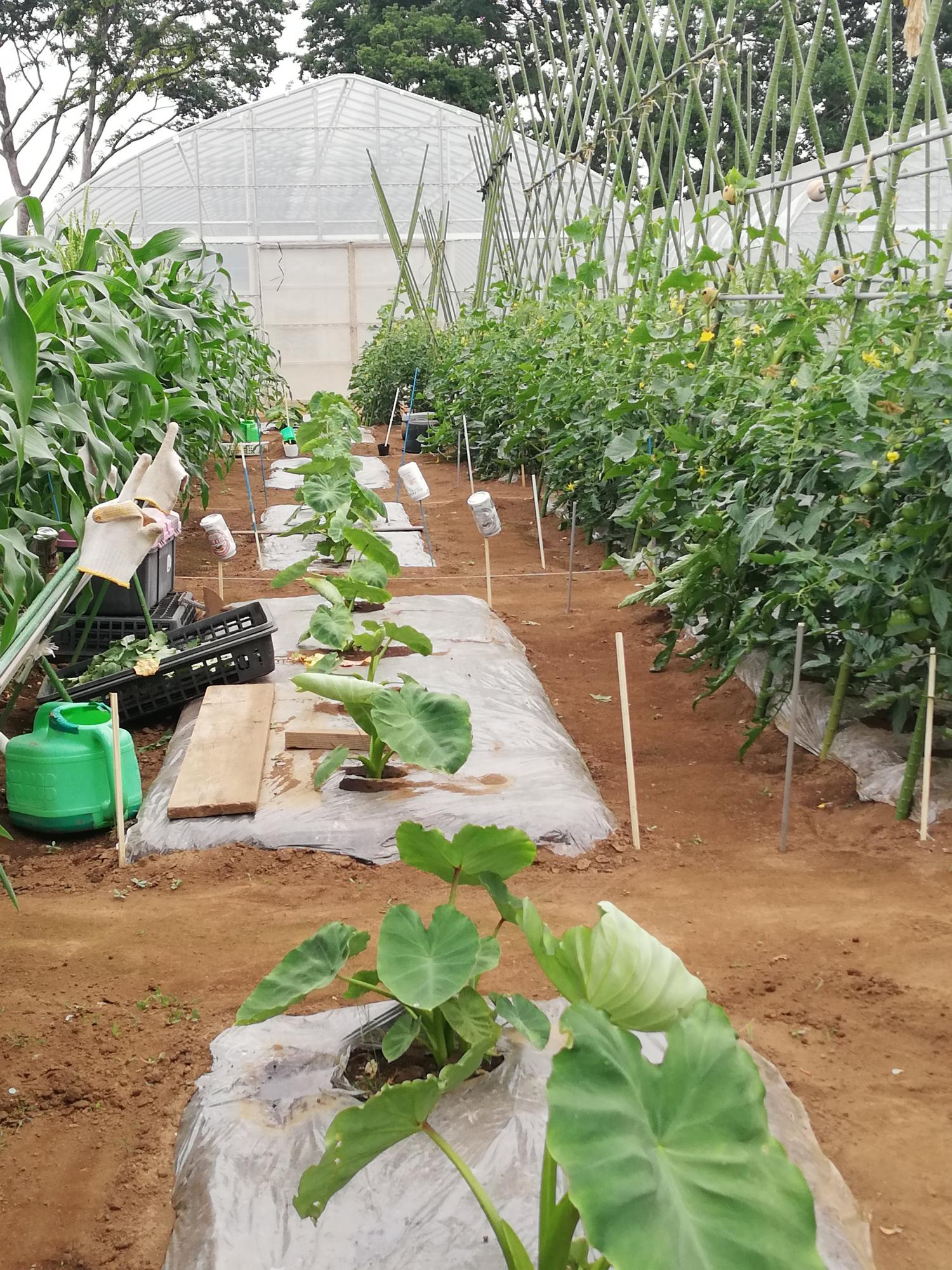 Agricultural school Ishizumi love rando image
