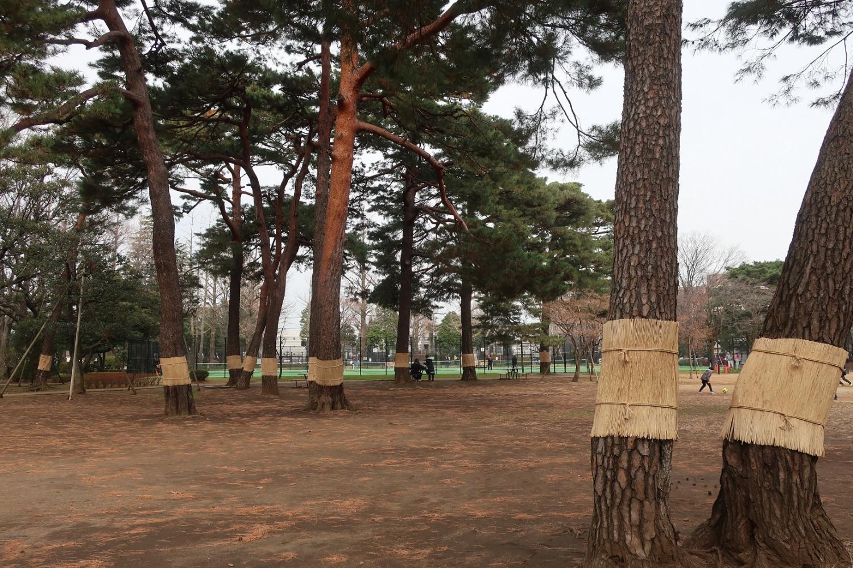 """""""圍起來把komo""""石神井松樹的風文化公園圖片"""