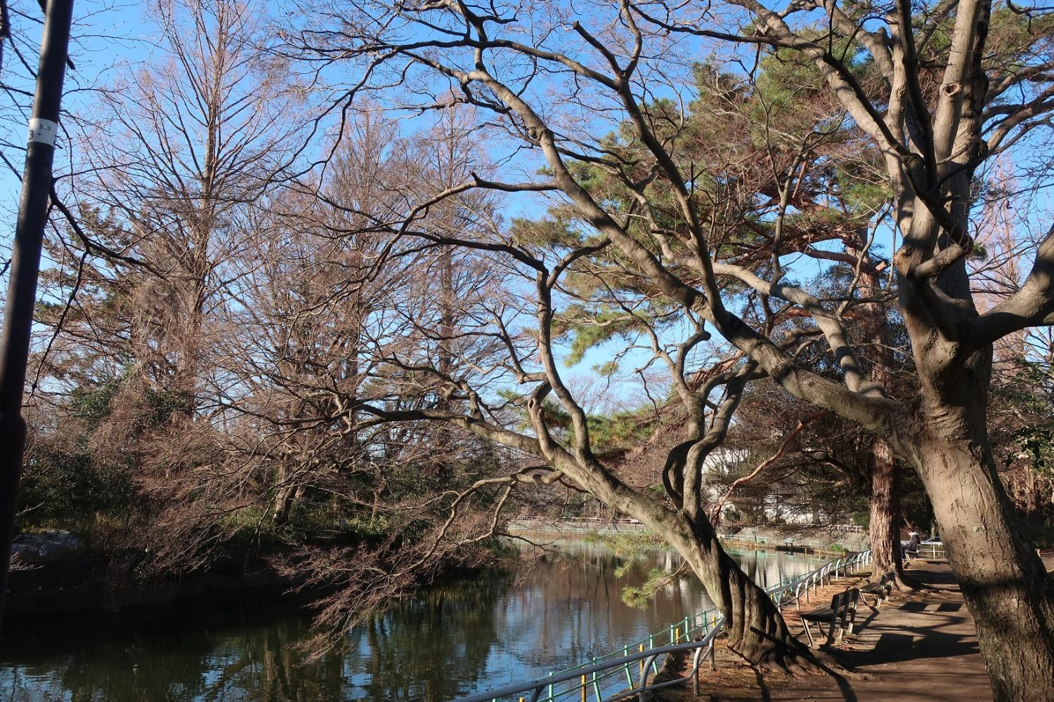 Musashiseki Park, the morning of January
