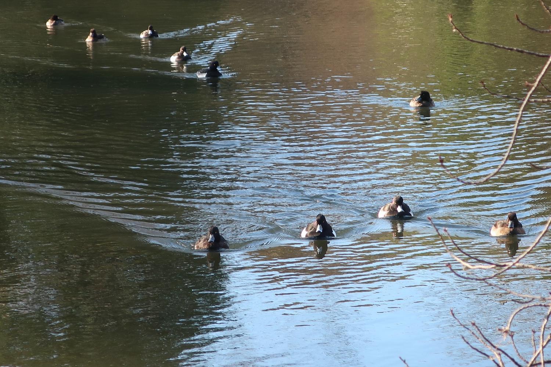 킨쿠로하지로(무사시세키 공원) 이미지
