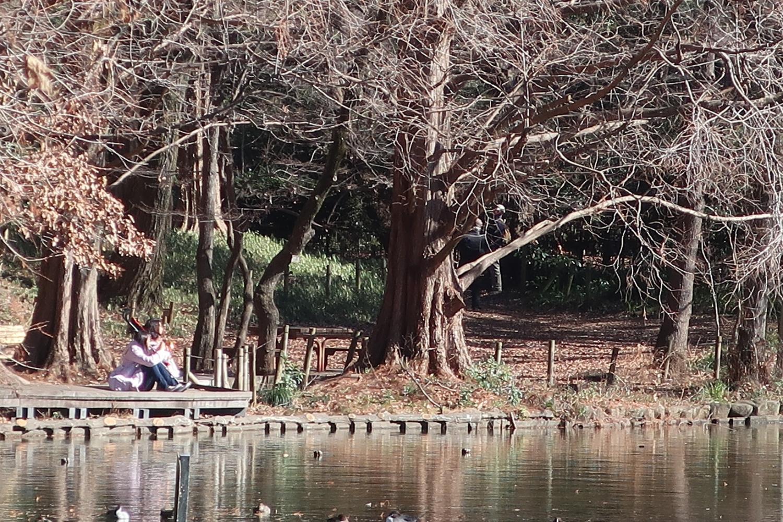 Shakujii Park, positive falls silent