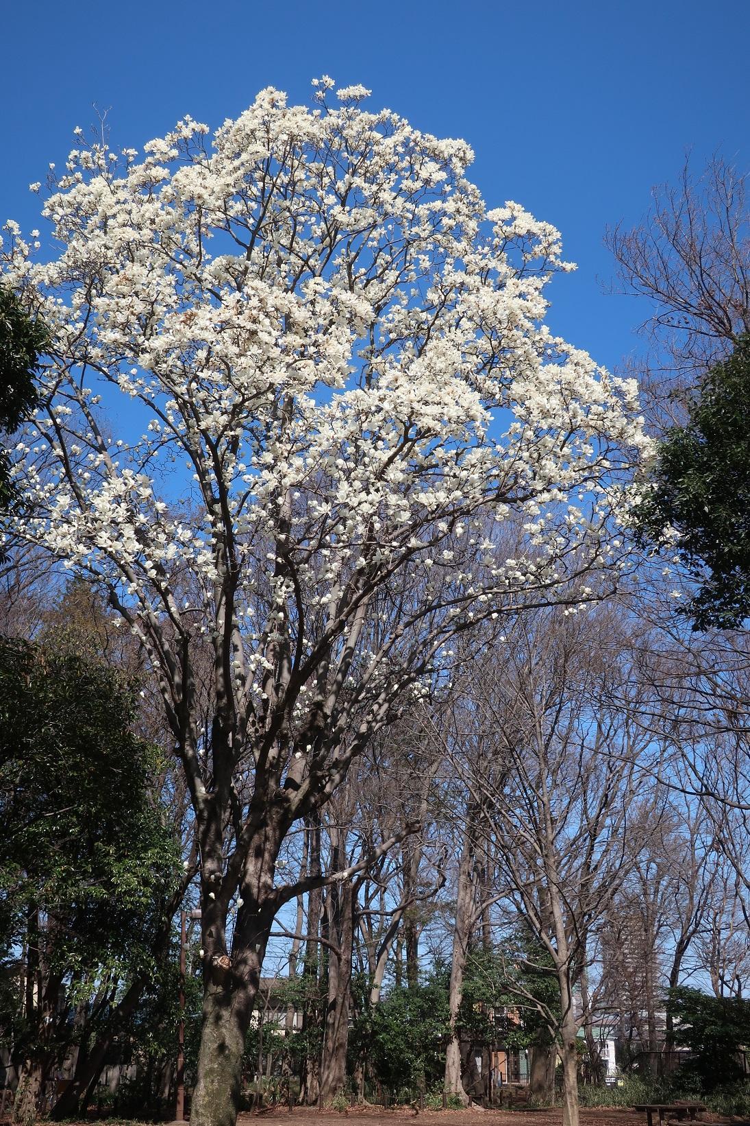 정두의 숲 녹지 하쿠모쿠렌