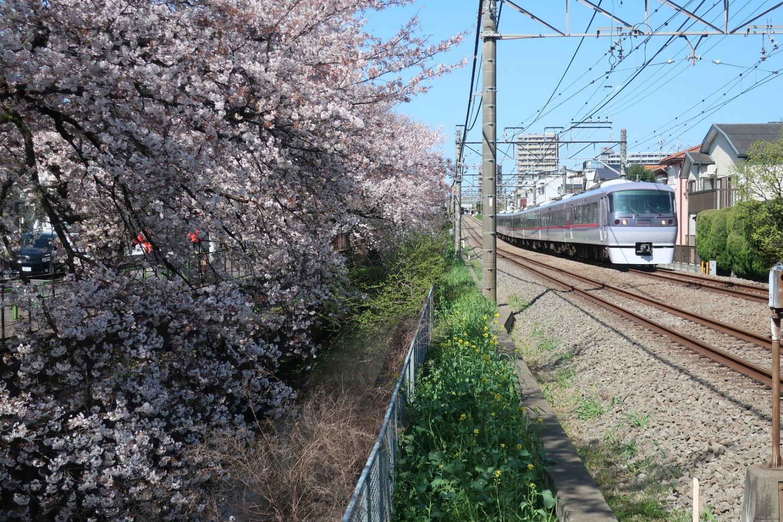 樱花3道题图片