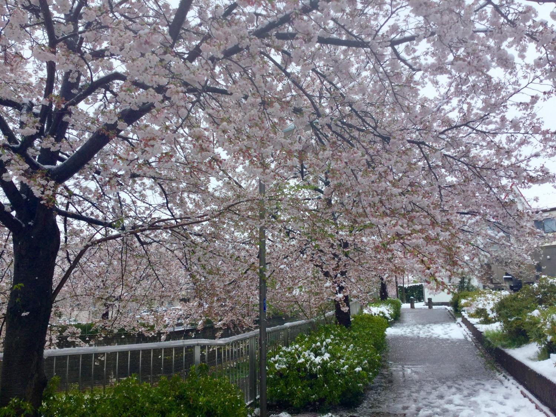 三月的雪图片