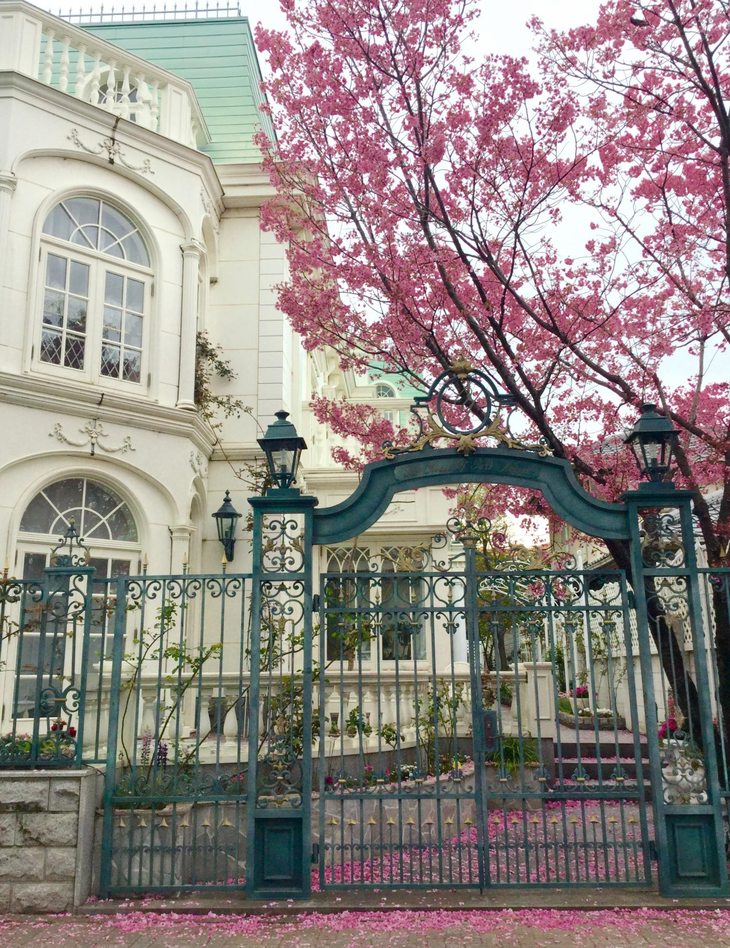 We want to take every year. Cherry tree and European-style building