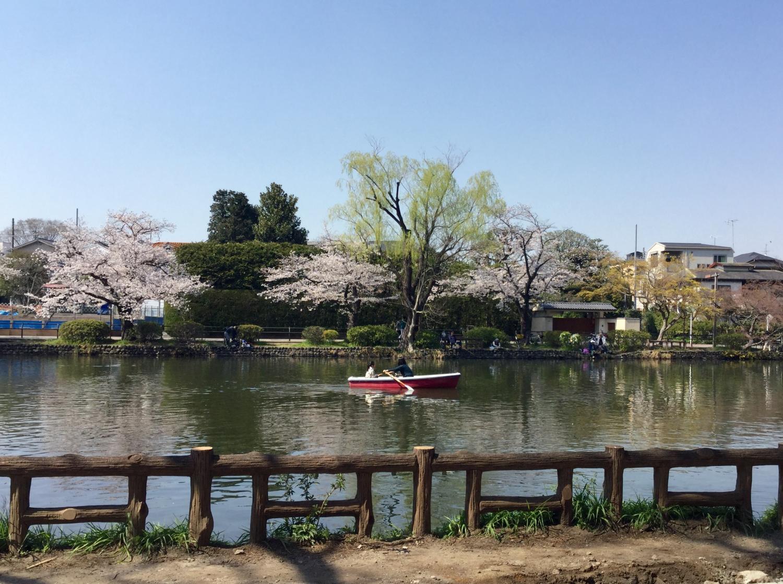 벚꽃의 계절의 보트 연못 최고!② 이미지