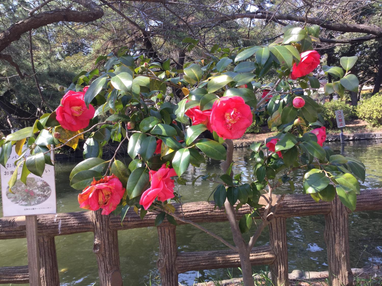 The seasonal boat pond best of cherry tree! Image