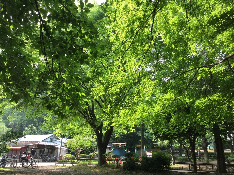 有一天的石神井公园