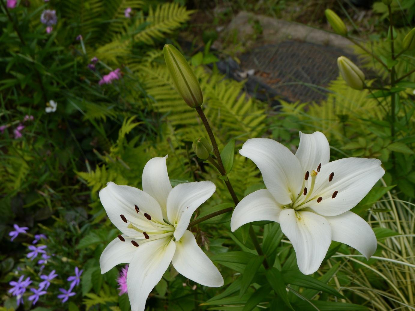 사계의 향기 로즈 가든의 백합의 꽃 이미지