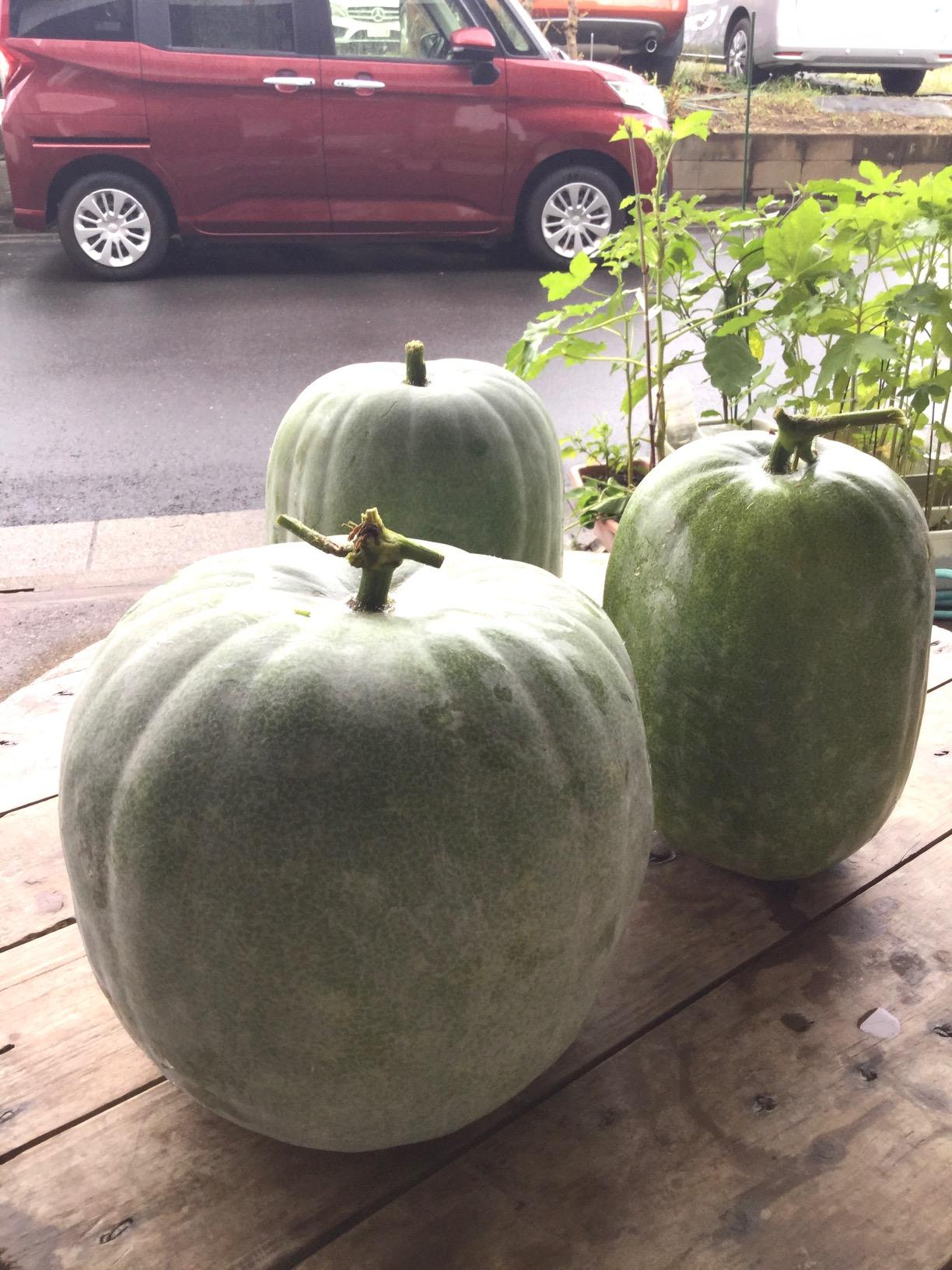 Extra-large wax gourd