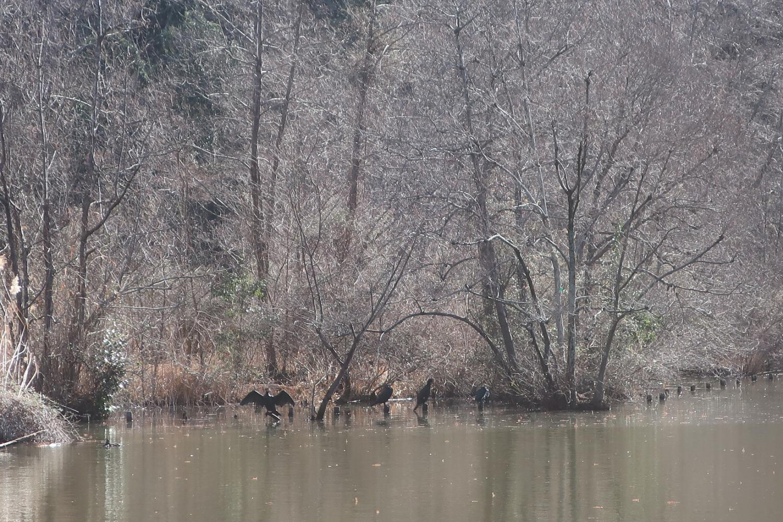물가의 들새(샤쿠지이코엔)