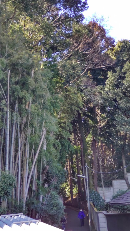 샤쿠지이코엔과 삼보사 사이의 좁은 길과 숲