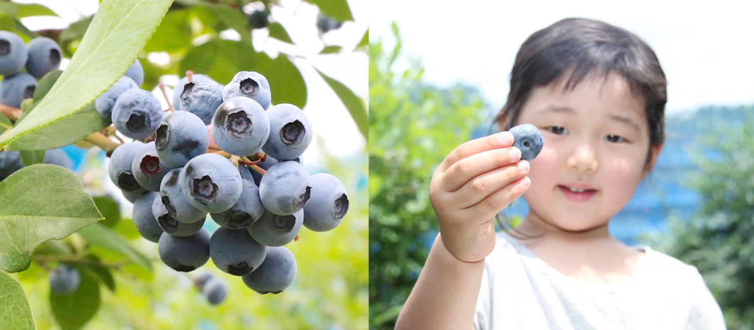 We tell way of enjoying blueberry from Nerima! It is ... image from art of <br> - knob collecting to delicious recipe
