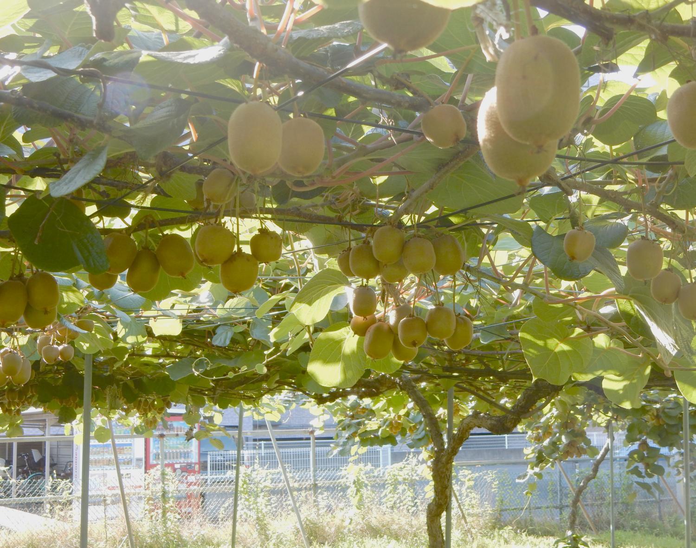 오자와 농원 이미지