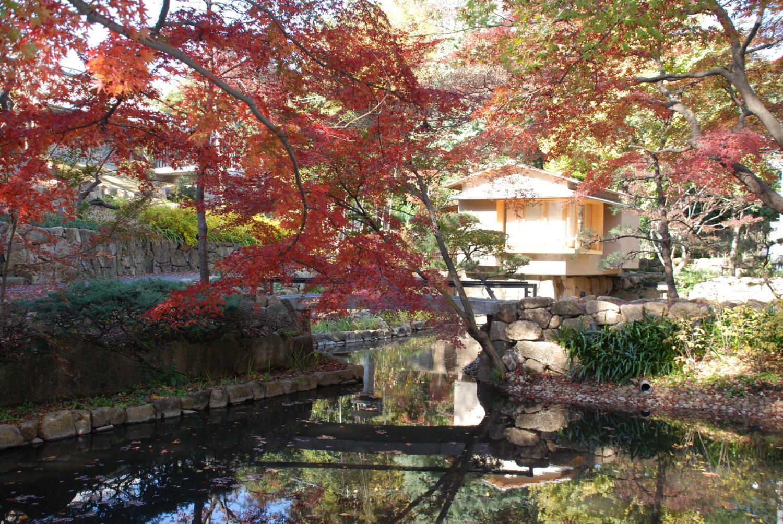 向山庭园感枫树会