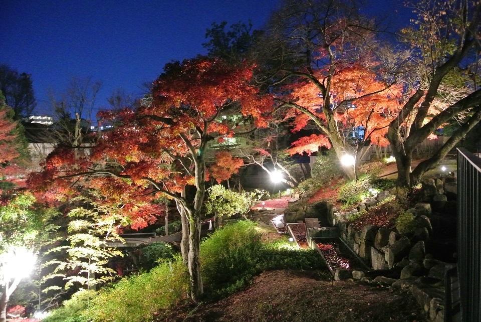 向山庭园枫叶的点灯