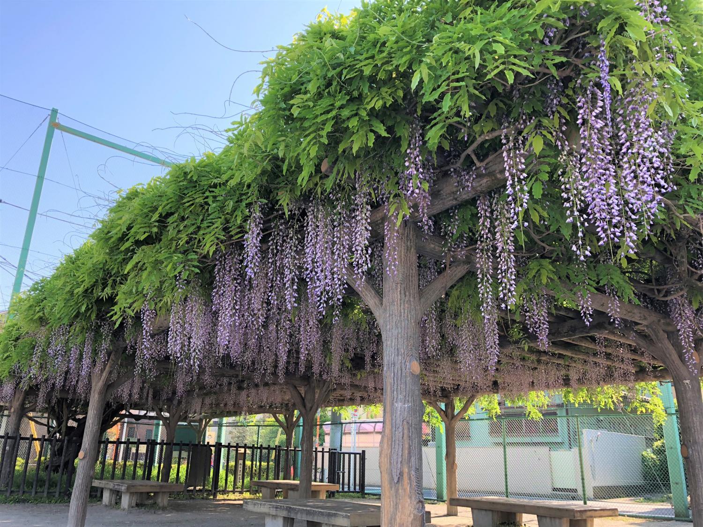 紫藤的花家庭音樂會