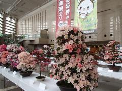 Atrium azalea exhibition