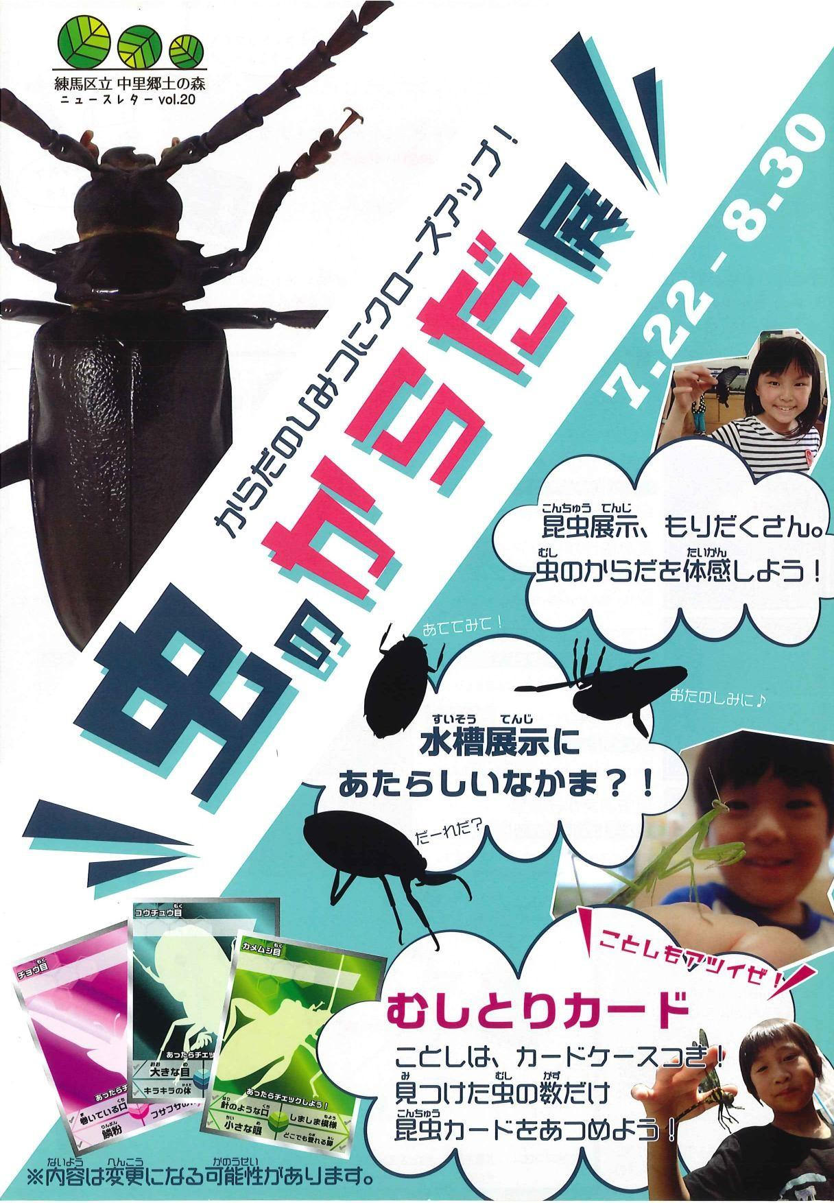 Body exhibition of insect
