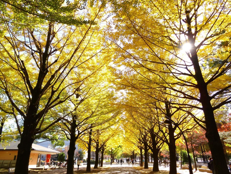 네리마노네리 걸음 무사시세키 자연 관찰 코스, 히카리가오카 단풍 코스【11월 6일 필착】