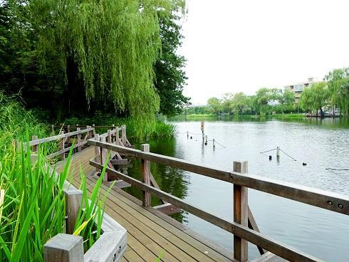 Shakujii pond promenade