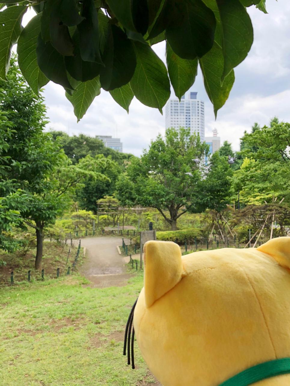 山冈degoron。平成杜鹃花公园