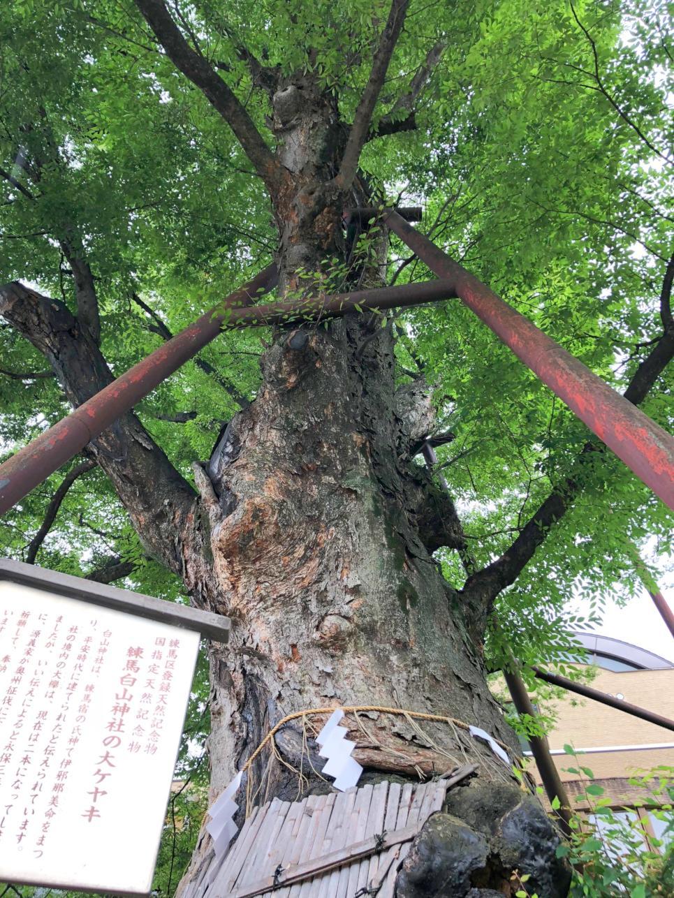 Is it secret panyasupotto? Hakusan, Nerima Shrine