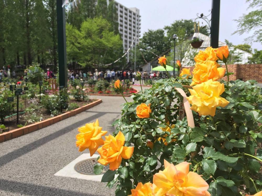 四季的香公园