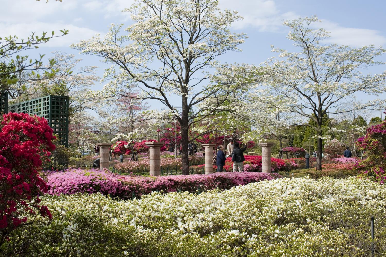 平成杜鹃花公园图片