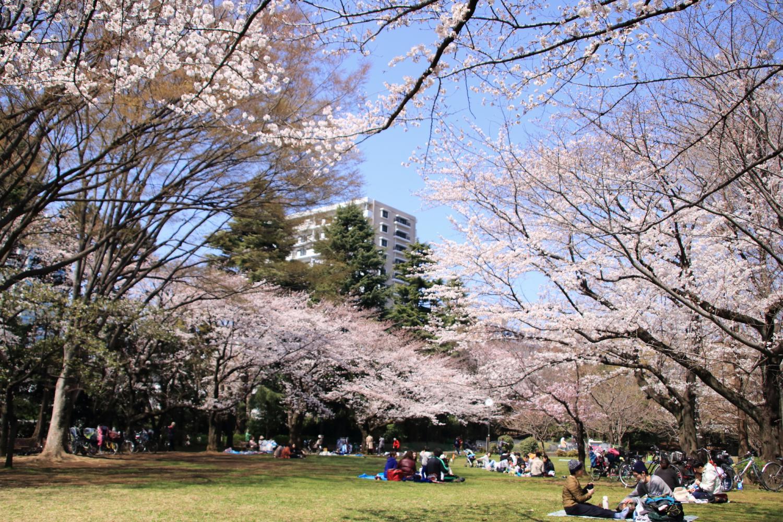 春天的風公園圖片