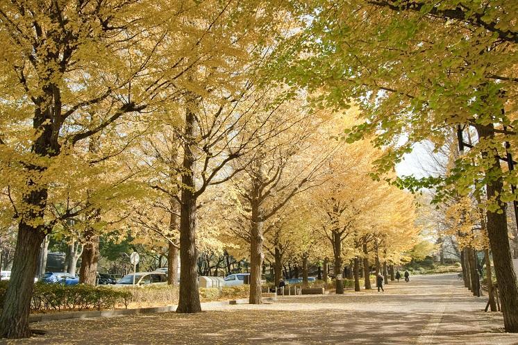 조호쿠 중앙 공원