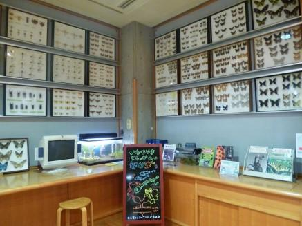이나리야마 도서관 곤충 코너