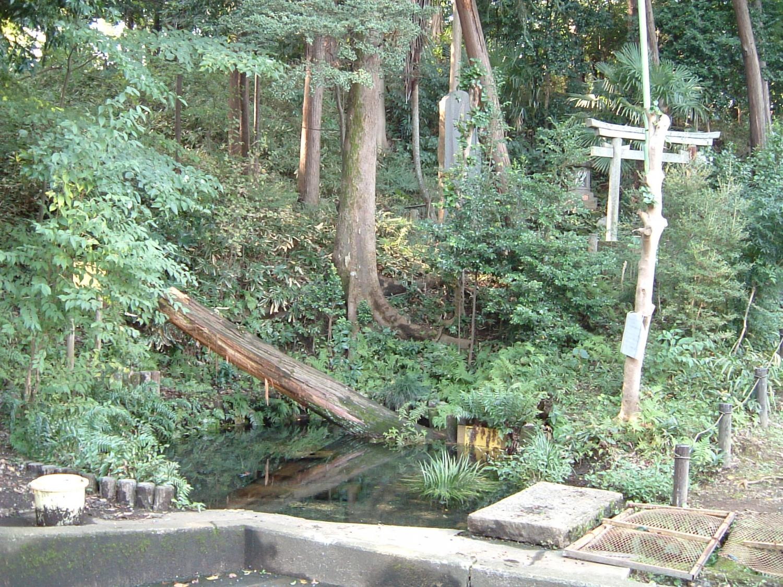 Forest of Inariyama rest