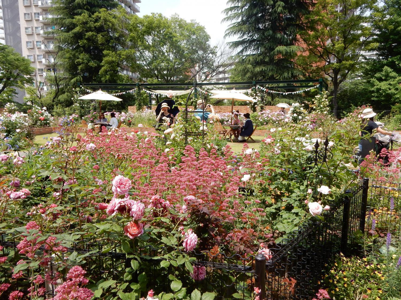 四季的香玫瑰园